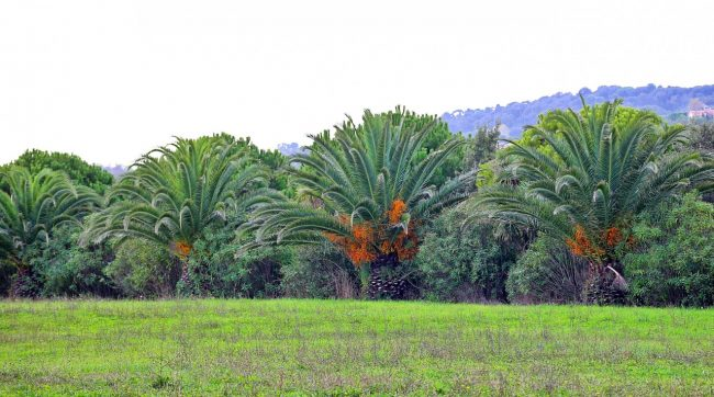 parcho-dei-laghetti-ppp-foto-twinssebastiani-4-650x362