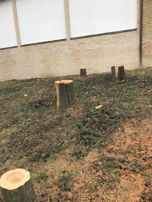 alberi-tagliati-al-cimitero-colmurano-2-488x650