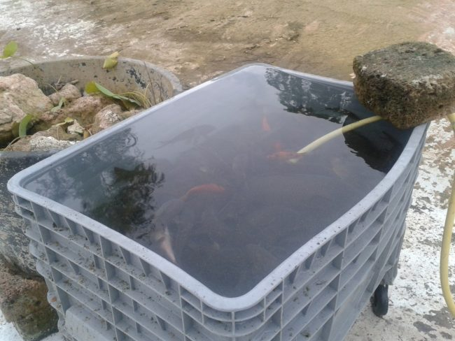 pesci-giardini-diaz-4-650x488