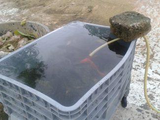 pesci-giardini-diaz-5-325x244