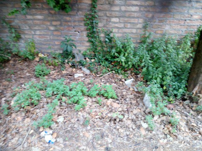 Degrado-contrada-Vallebona-cimitero-12-650x488