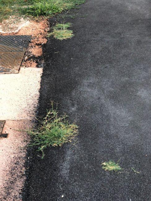 gramigna-asfalto-1-488x650