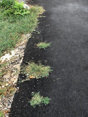 gramigna-asfalto-4-300x400