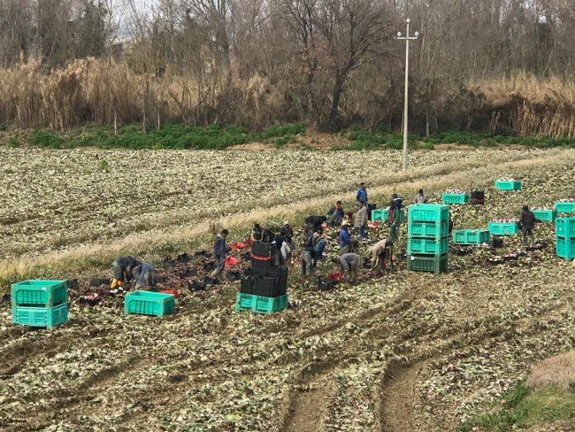 controlli-azienda-agricola-civitanova-2-650x488