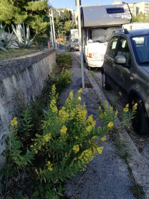 Lo-stato-di-abbandono-e-di-sporcizia-di-via-Paladini-zona-parcheggio-Sferisterio-3-488x650