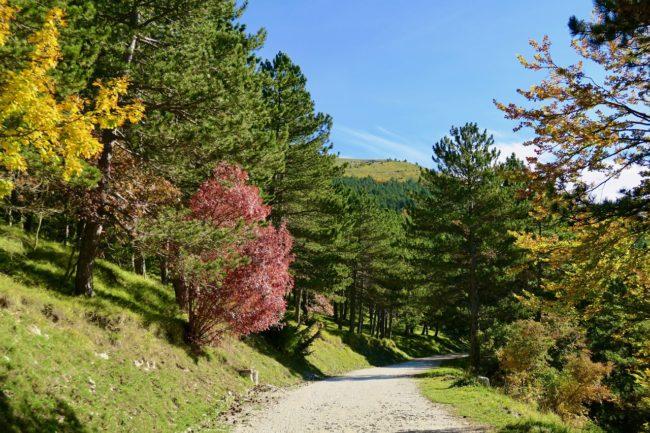 foliage-di-frontignano-1-650x433