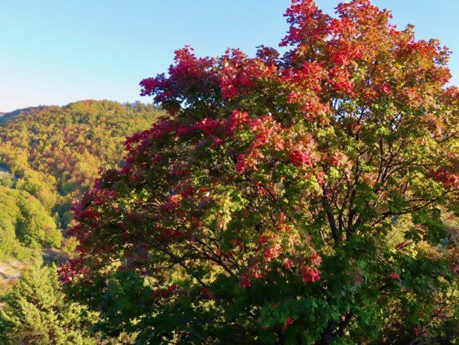 foliage-di-frontignano-12-650x488