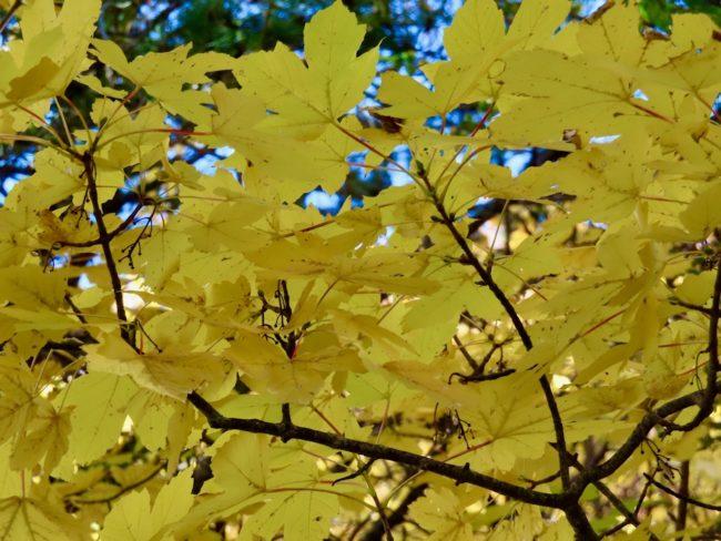 foliage-di-frontignano-13-650x488