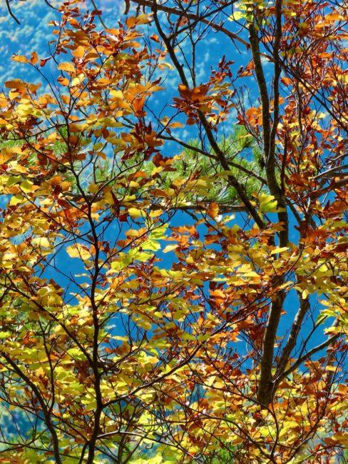 foliage-di-frontignano-16-488x650