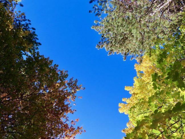 foliage-di-frontignano-19-650x488