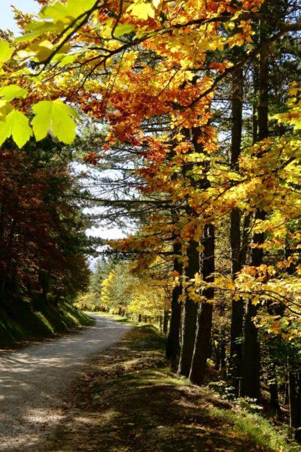 foliage-di-frontignano-2-433x650
