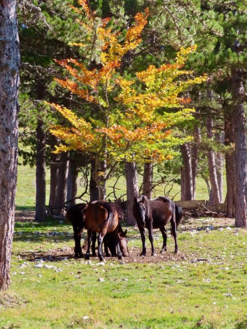 foliage-di-frontignano-22-488x650