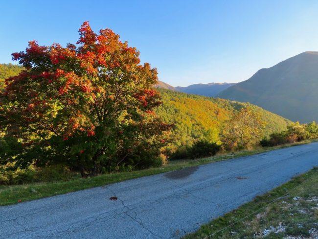 foliage-di-frontignano-23-650x488