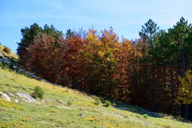foliage-di-frontignano-5-650x433