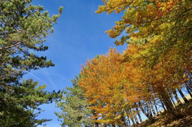 foliage-di-frontignano-6-650x433