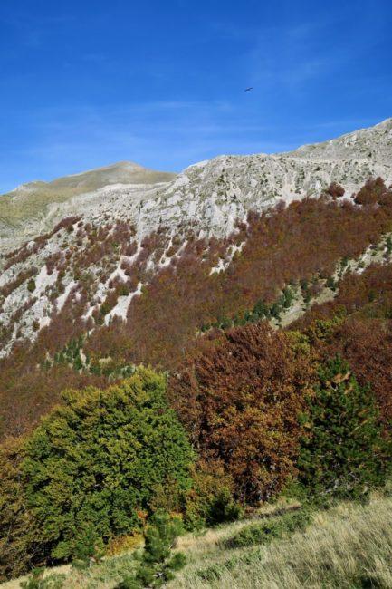 foliage-di-frontignano-7-433x650
