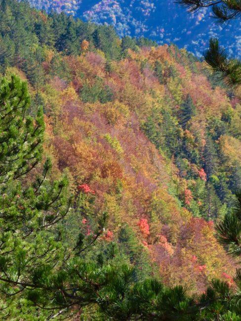 foliage-di-frontignano-8-488x650