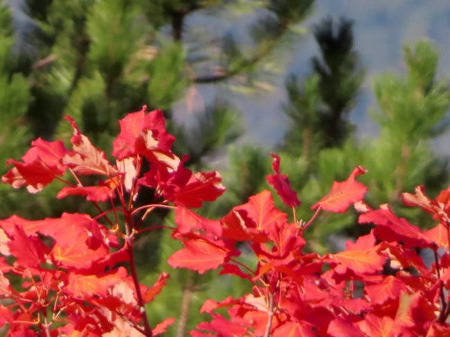 foliage-di-frontignano-9-650x488