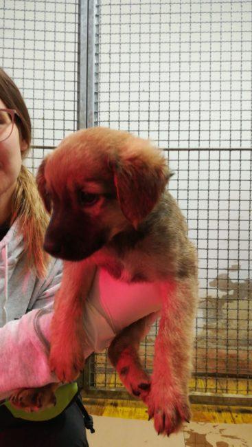 15-cuccioli-abbandonati-cercano-famiglia-10-367x650