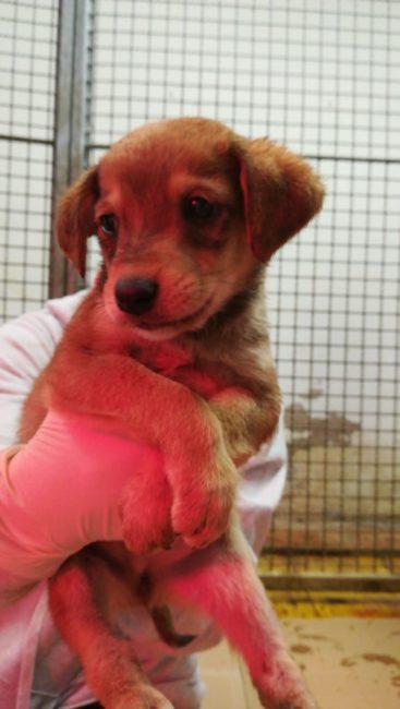 15-cuccioli-abbandonati-cercano-famiglia-3-367x650