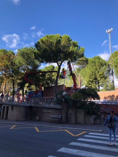 alberi-viale-martiri