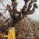 cade-da-pianta-serrapetrona-2-55x55