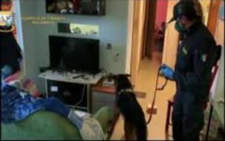finanza-droga-casa-cane