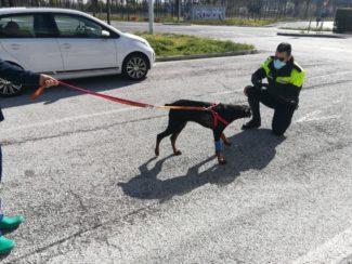 polizia-locale-sequestro-cane