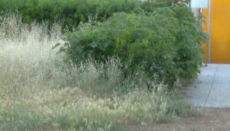 verde-potenza-picena-5-e1590505916140