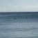 delfini-civitanova