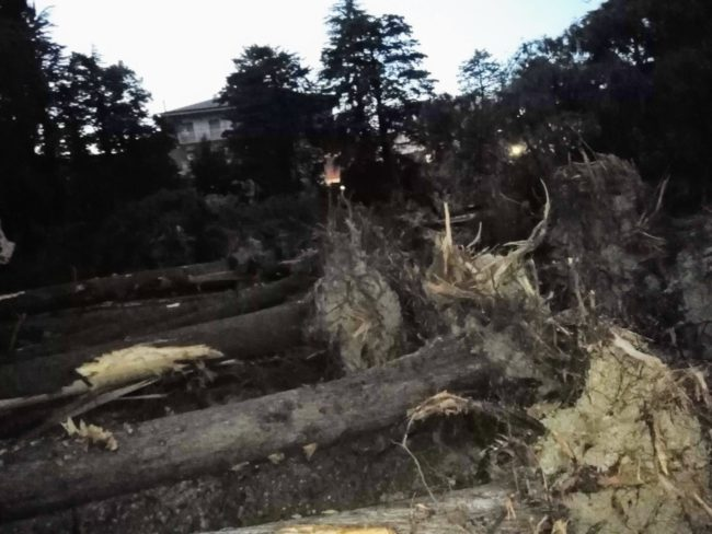 alberi-ex-casermette-1-650x488