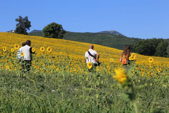 valle-di-san-clemente-loccioni-apiro-2020-07-09-at-18.40.52-1-650x433