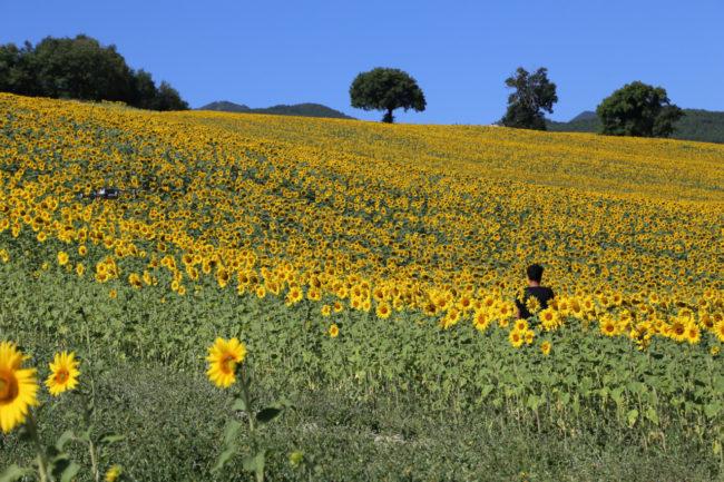 valle-di-san-clemente-loccioni-apiro-2020-07-09-at-18.41.00-1-650x433