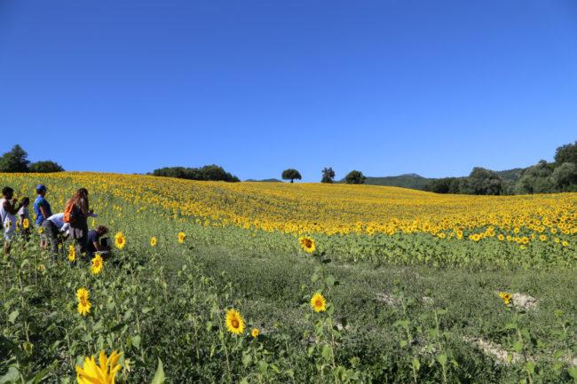 valle-di-san-clemente-loccioni-apiro-2020-07-09-at-18.41.02-1-650x433