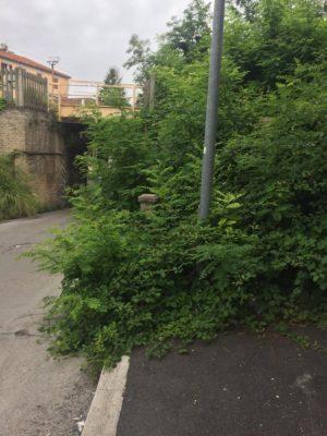 verde_non_curato_via_marche_macerata-1-300x400