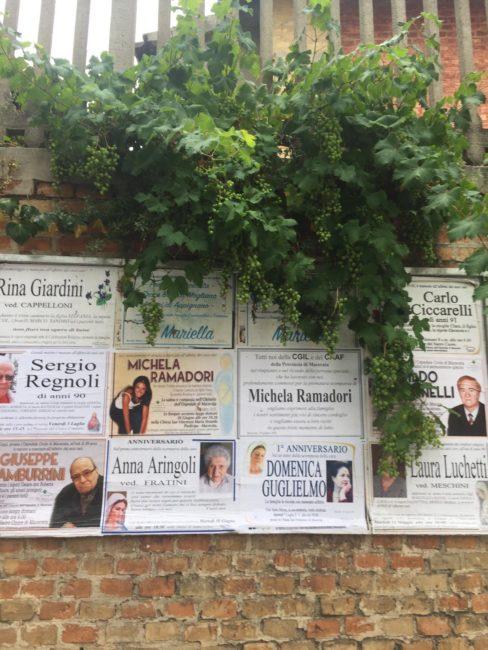 verde_non_curato_via_marche_macerata-3-488x650