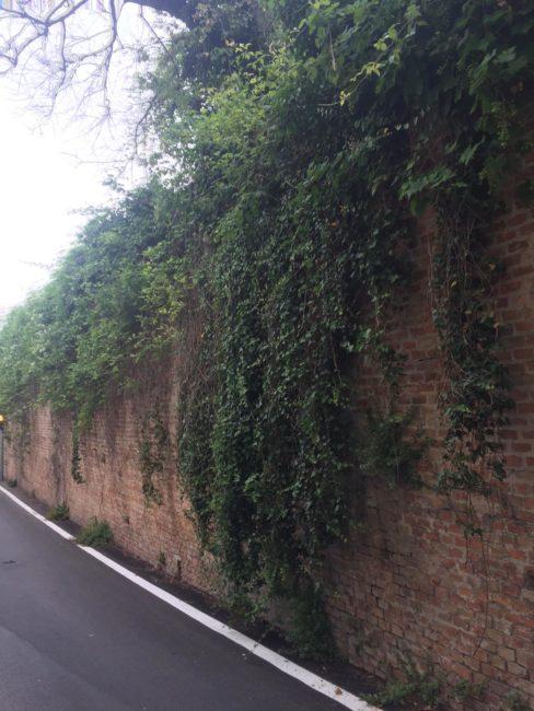 verde_non_curato_via_marche_macerata-4-488x650