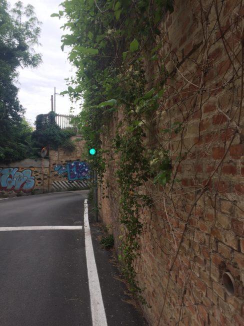 verde_non_curato_via_marche_macerata-5-488x650