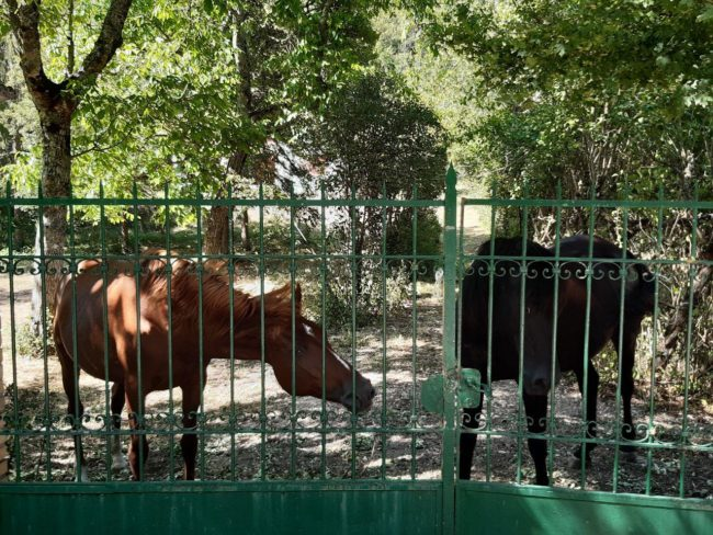 Ussita-cavalli-capovallazza