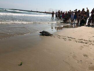 rilascio tartaruga (1)