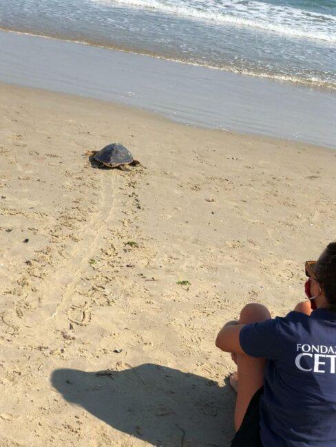 rilascio-tartaruga-2-488x650