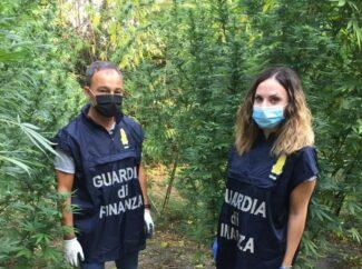 sequestro 70 kg marijuana corridonia (1)