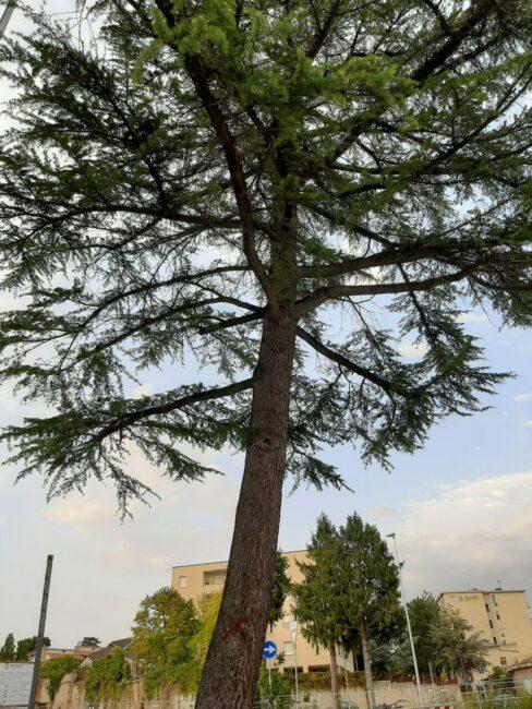 alberi-campus-4-488x650