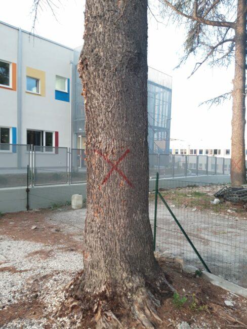 alberi-campus