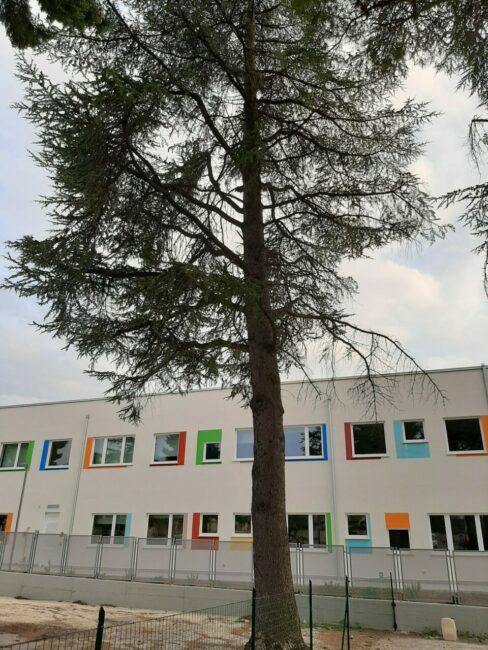 alberi-campus-5-488x650