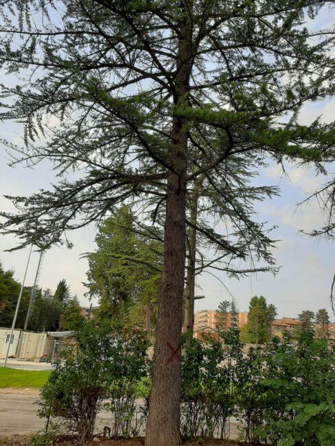 alberi-campus-6-488x650