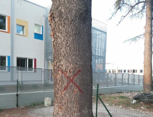 alberi-campus-7-650x498