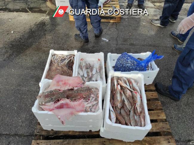 pesce_sequestrato_capitaneria-2-650x486