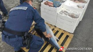 pesce_sequestrato_capitaneria-3-325x183