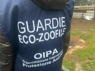 oipa-guardia-zoofile-ark